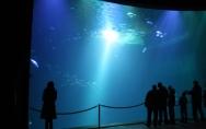 ozeanum 2011